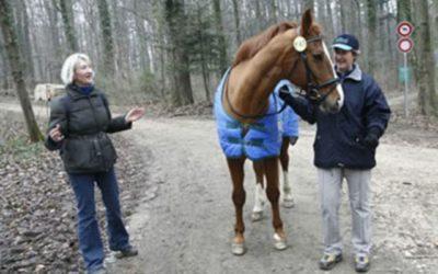 Lebenshürden mit dem Pferd überwinden. Bei einer speziellen Therapieform hilft das Pferd, eine persönliche Krise zu überwinden
